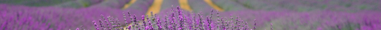 cropped-lavender-894919-1.jpg